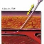 Sheath